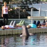 DolphinYoga